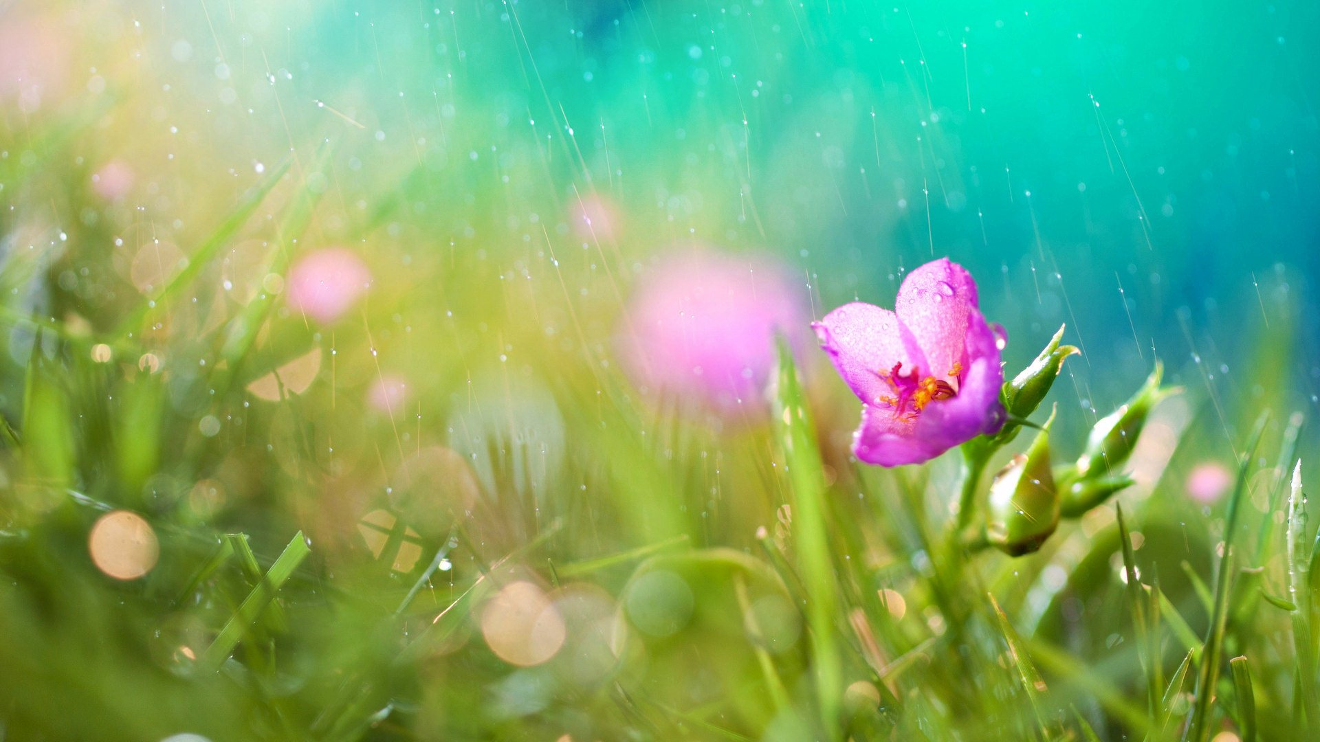 rainfall flowers free download