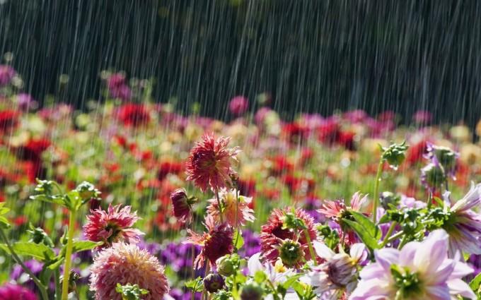 rainfall images