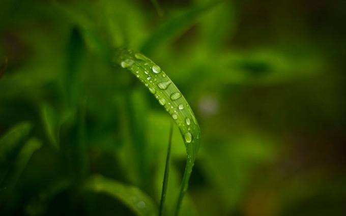 rainfall wallpaper download