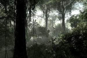 rainforest dark images