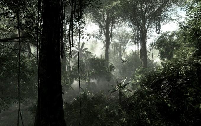 rainforest dark images