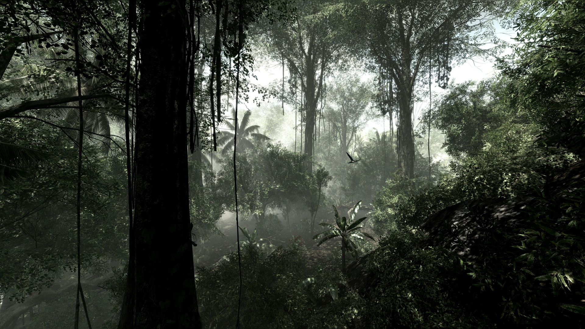 rainforest dark - HD Desktop Wallpapers | 4k HD