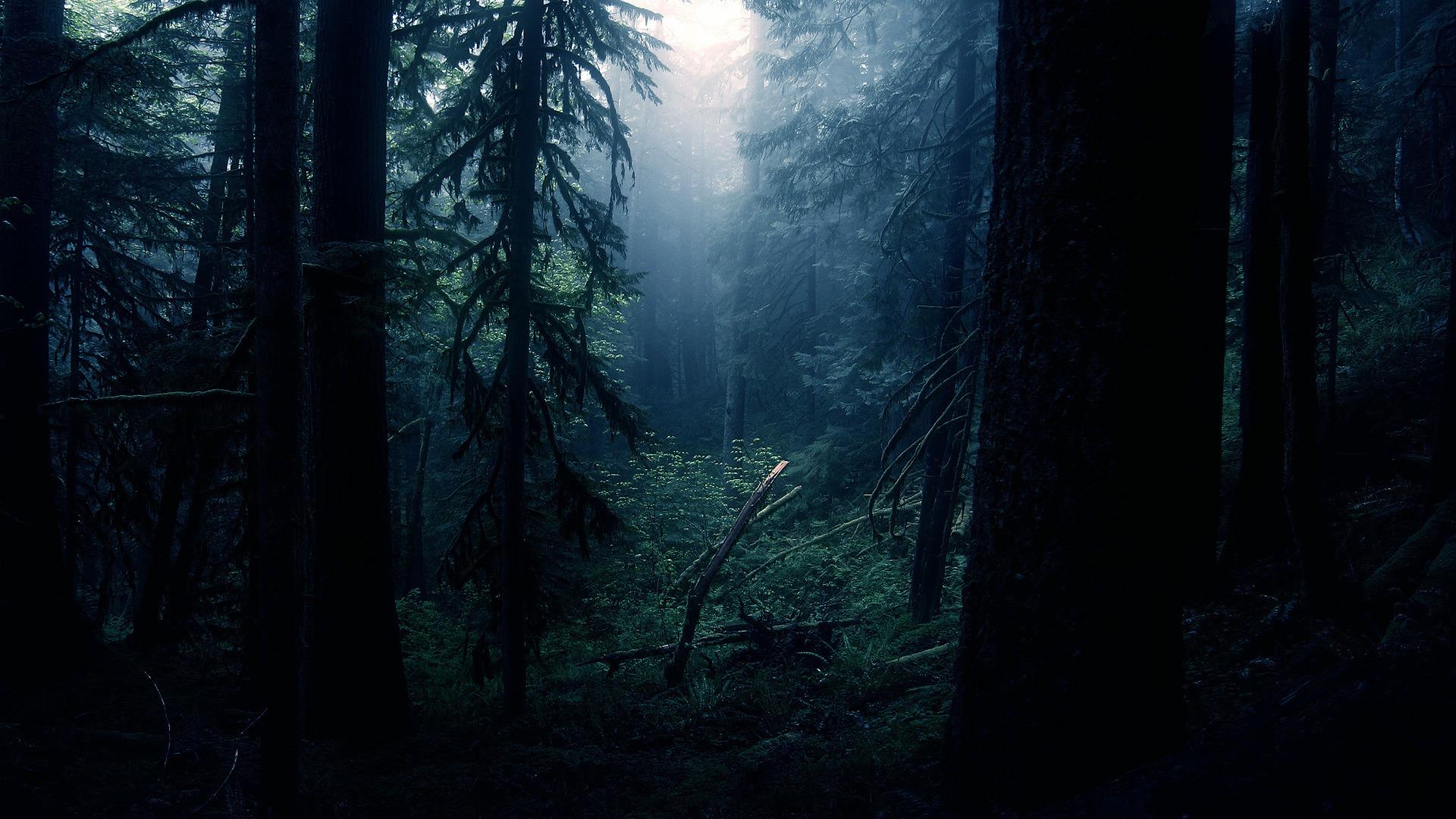 rainforest dark