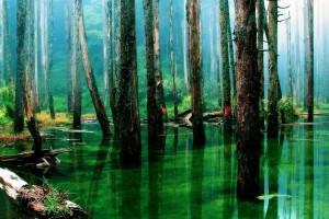 rainforest hd landscape