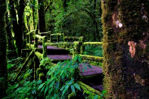 rainforest images