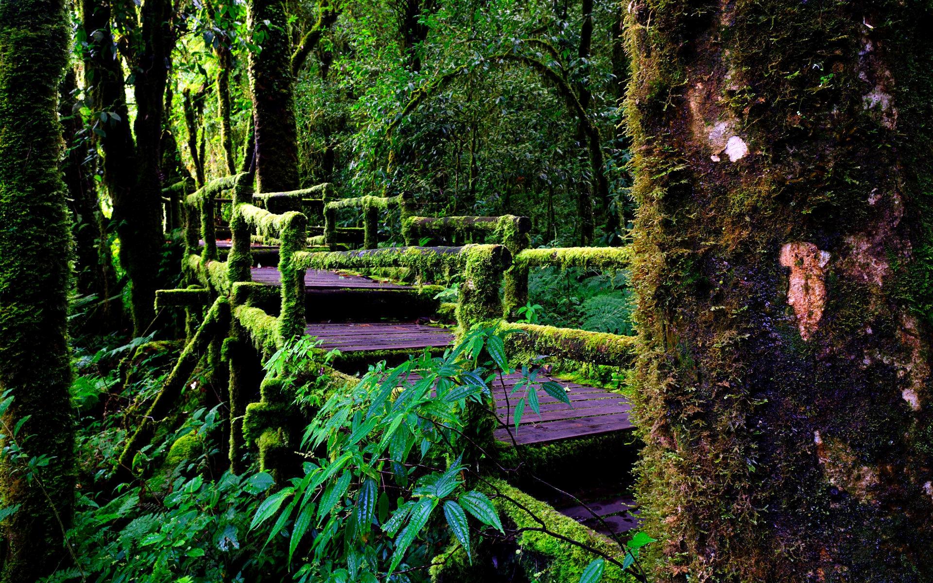 rainforest hd desktop wallpapers - photo #12