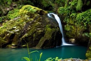 rainforest landscape hd