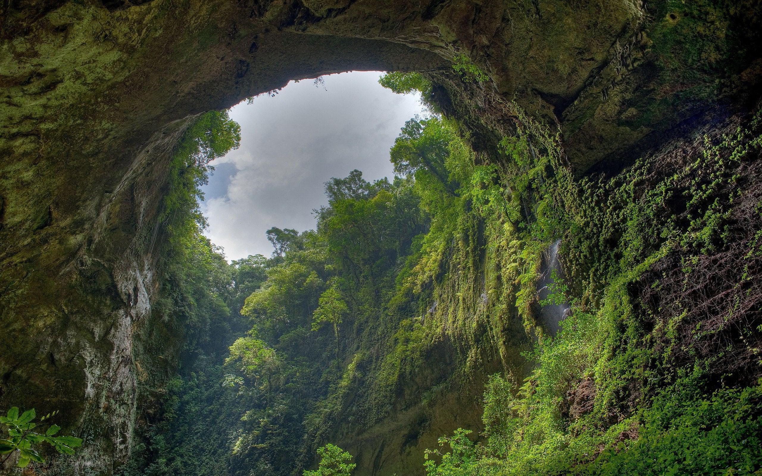 rainforest nature wallpaper