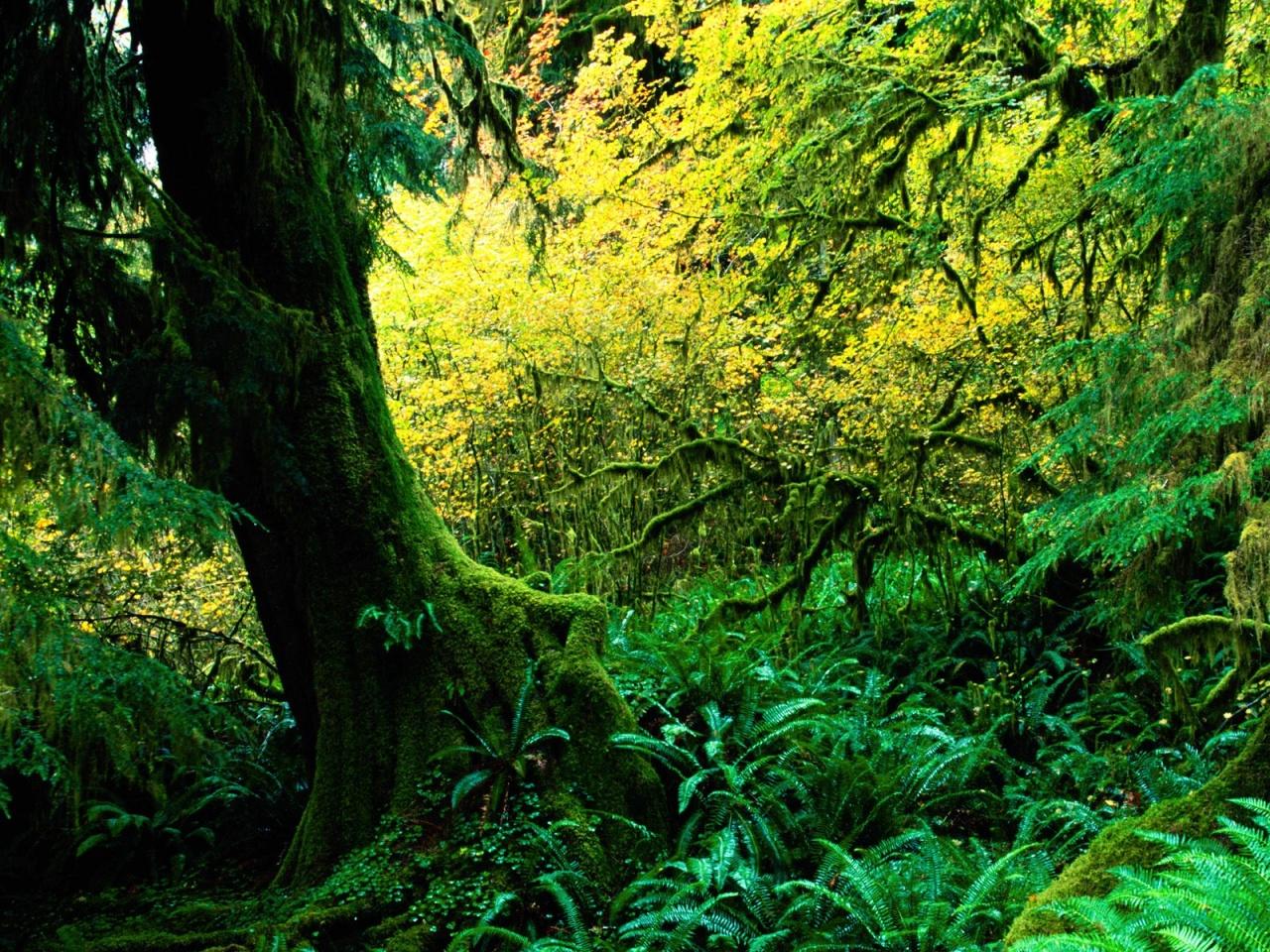 rainforest photos