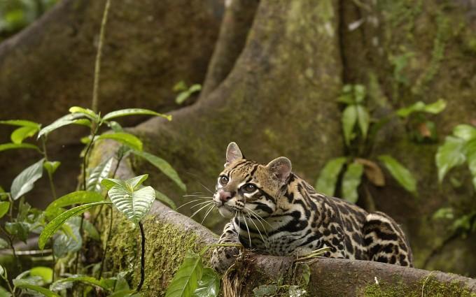 rainforest pictures cat