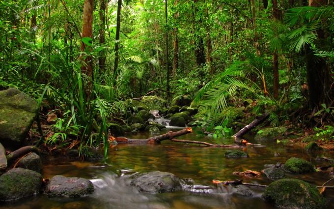 rainforest screensaver