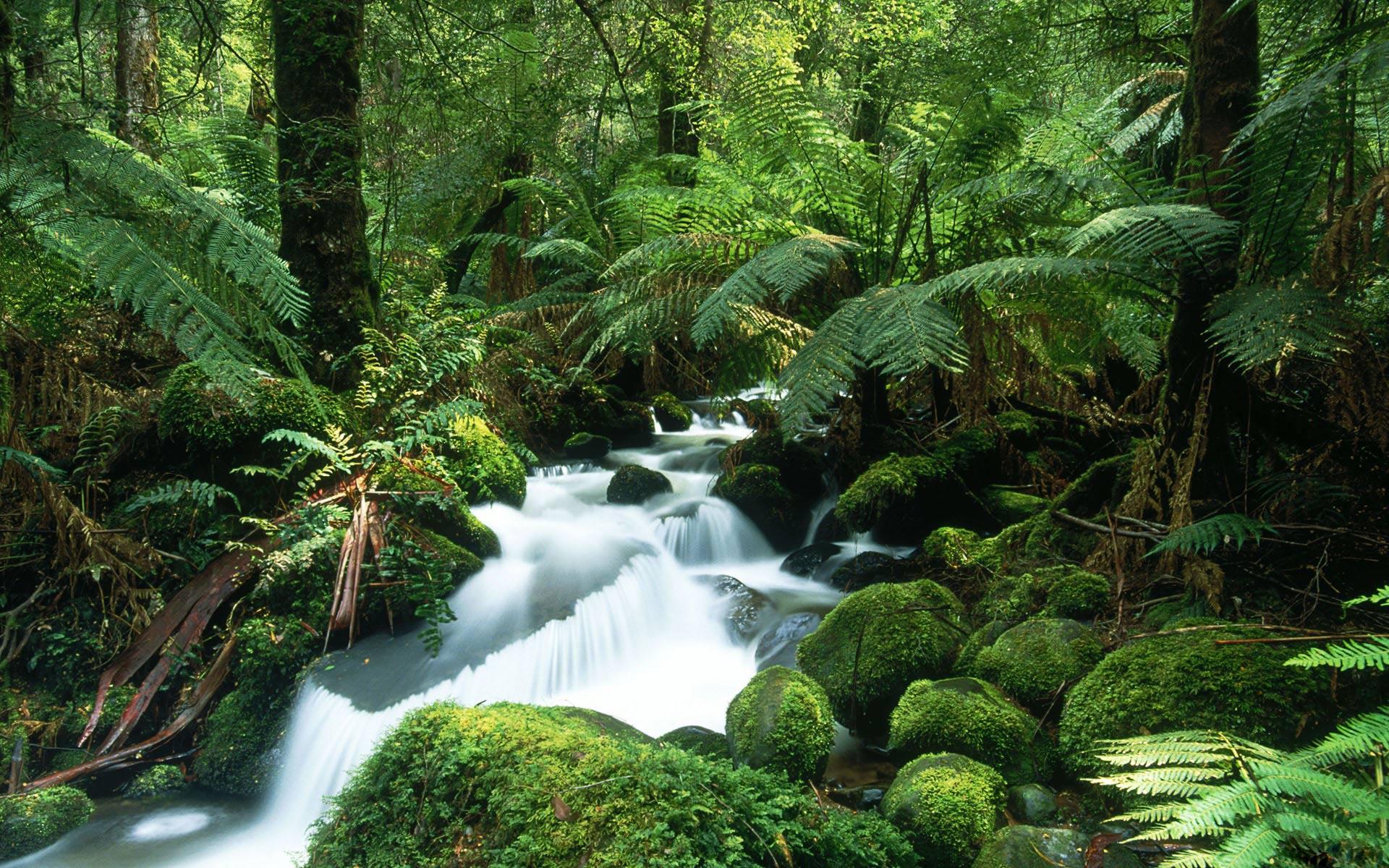 rainforest wallpaper beautiful