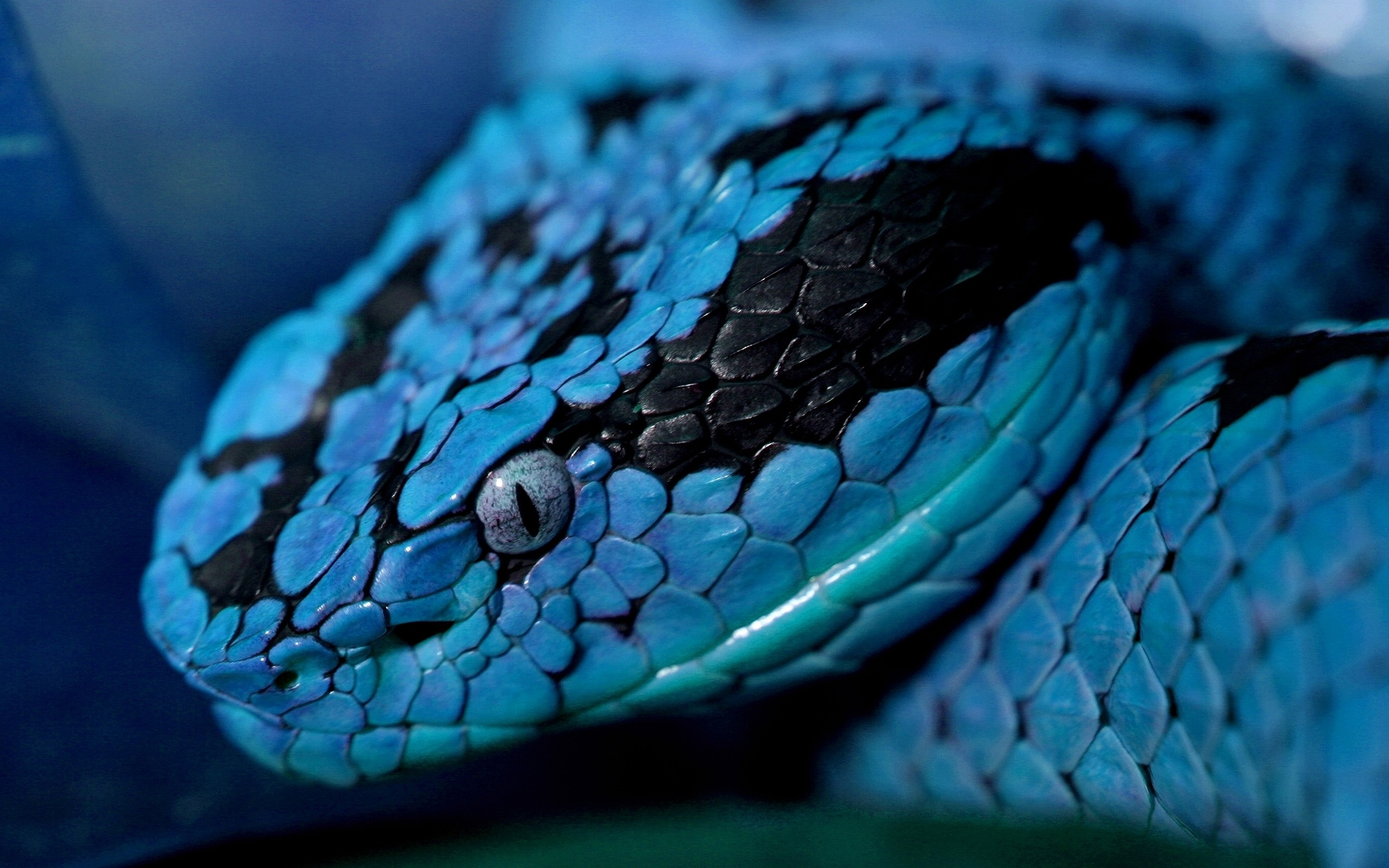 rattlesnake hd