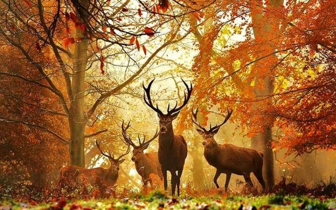 realtree wallpaper nature