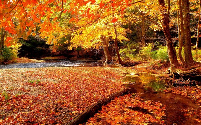 Labels Red Autumn Leaves Photography Hd Wallpapers For: Red Autumn Leaves - HD Desktop Wallpapers