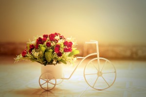 red roses creative