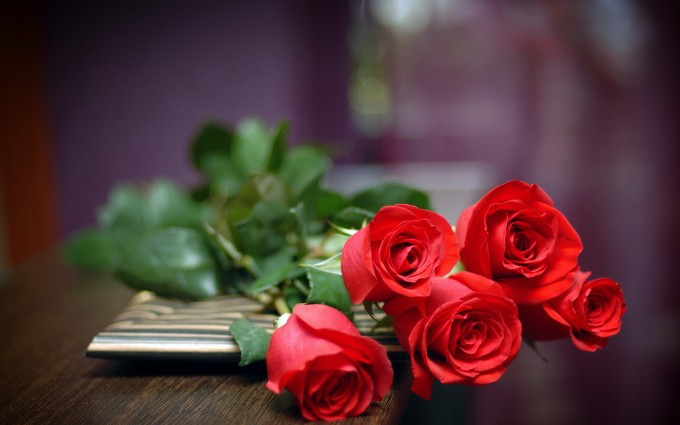 red roses lvoely