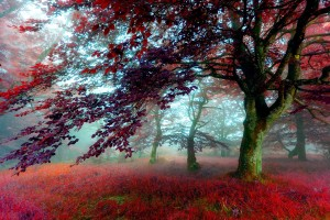 red scenery download images