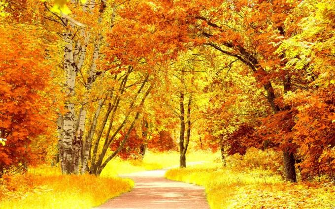 red yellow scenery