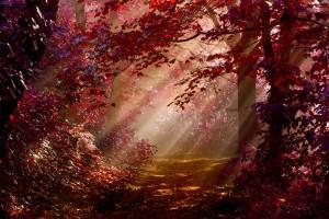 redwood forest wallpaper desktop