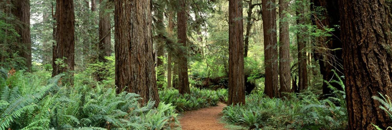 4k wallpaper nature redwoods -#main