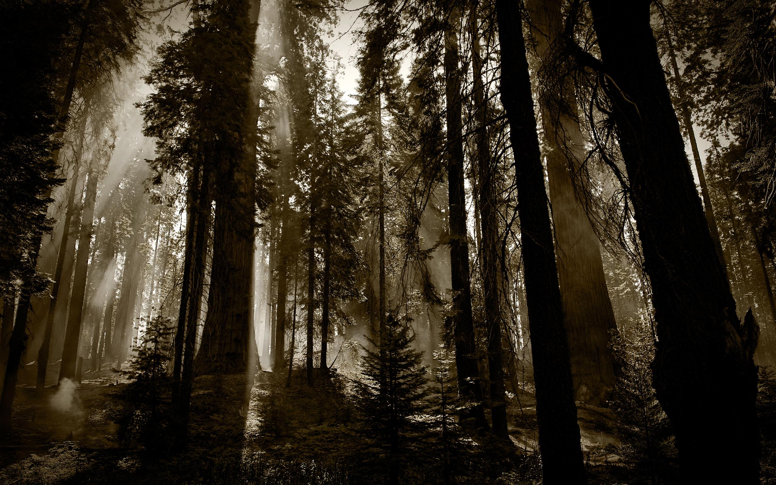 4k wallpaper nature redwoods - photo #1