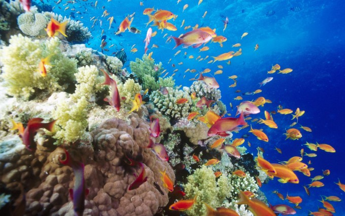 reef picture