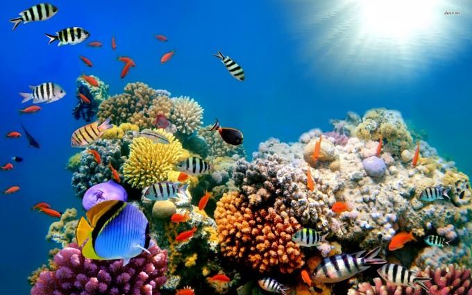 reef wallpaper amazing
