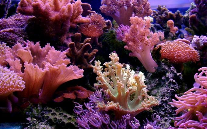 reef wallpaper beach