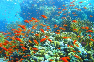 reef wallpaper cool