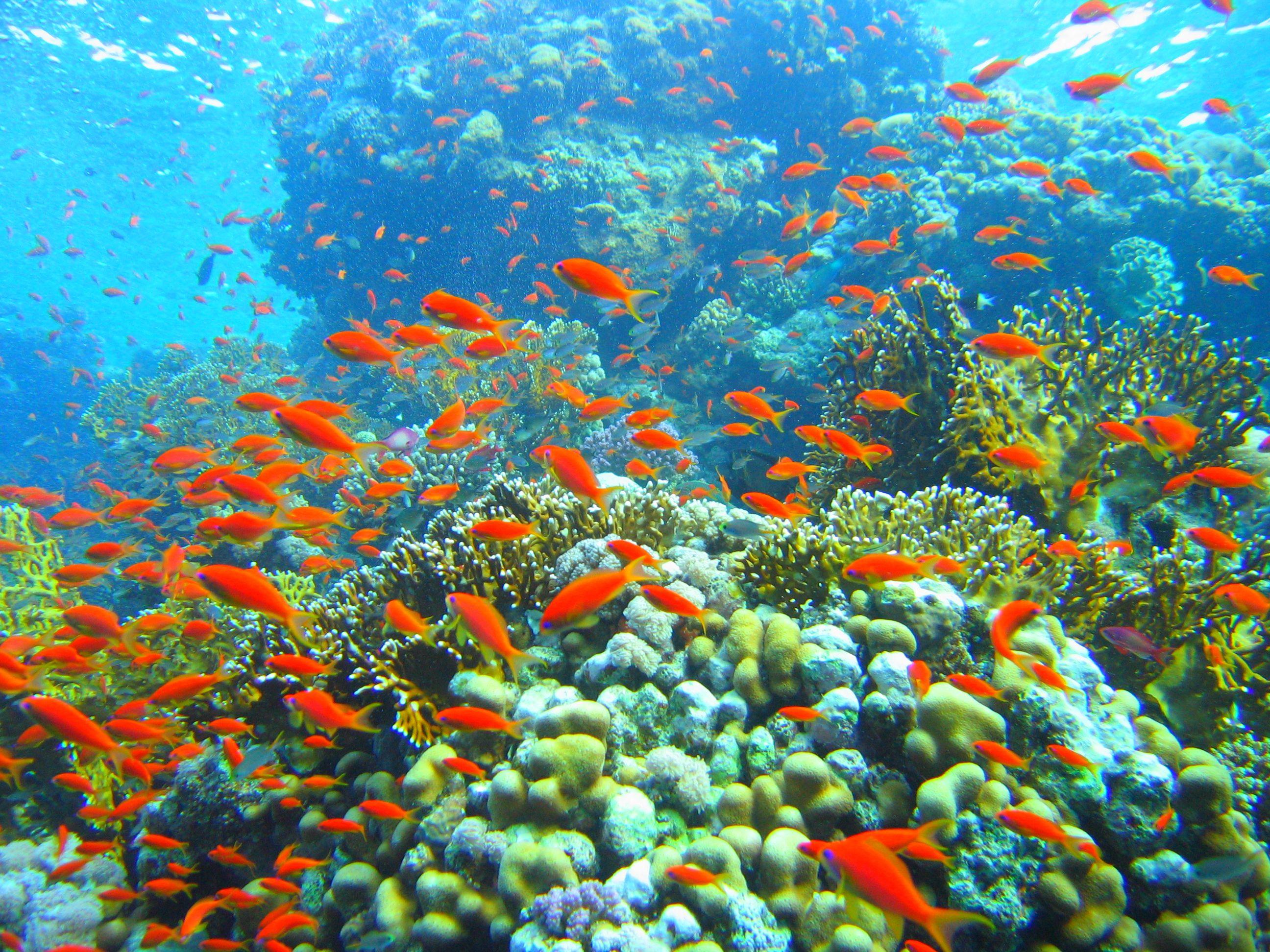 reef wallpaper cool