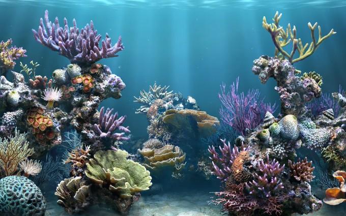 reef wallpaper gorgeous