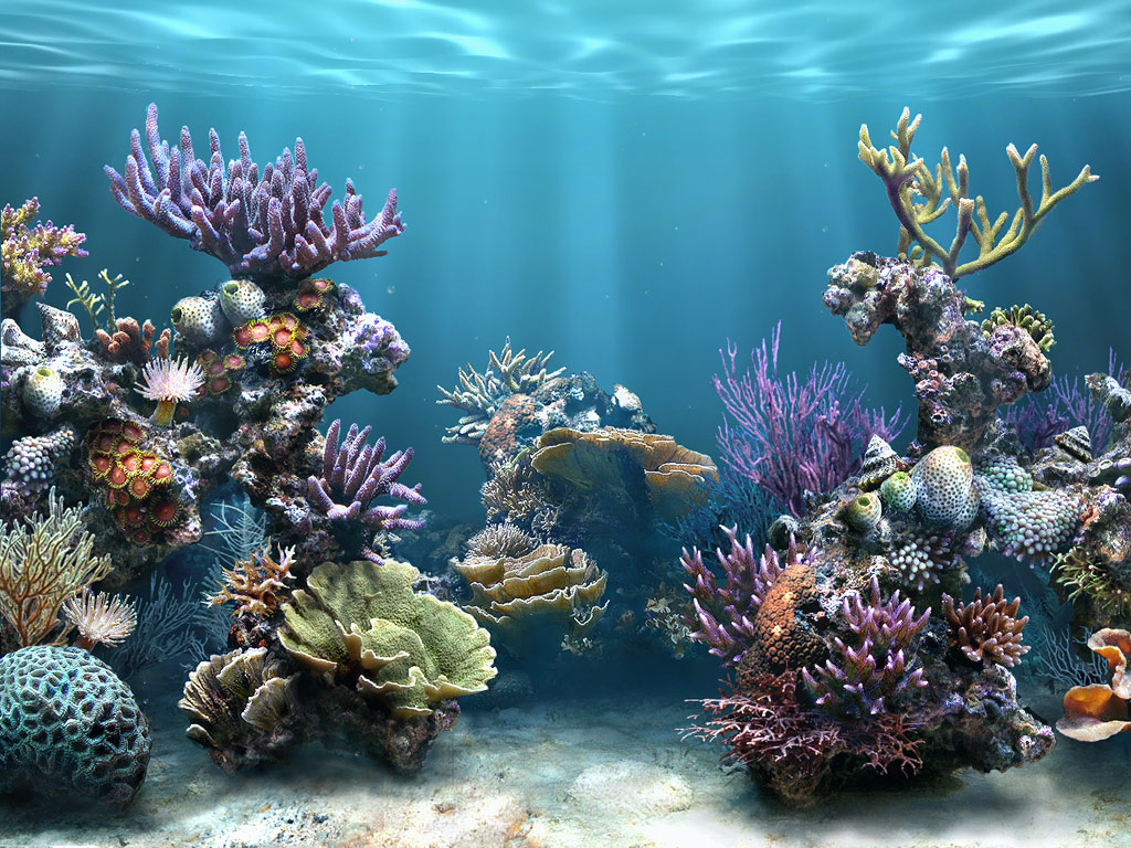 reef wallpaper gorgeous