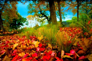 retina wallpaper autumn nature
