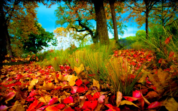 retina wallpaper autumn nature