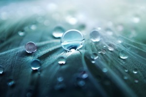 retina wallpaper dew drops