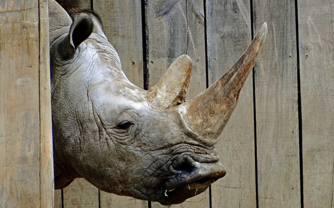 rhino hd pictures