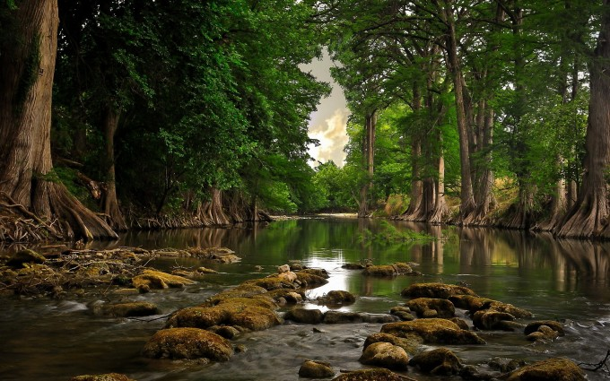 river wallpaper forest hd
