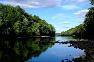 river wallpaper jungle