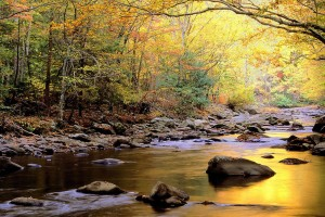 river wallpaper nature