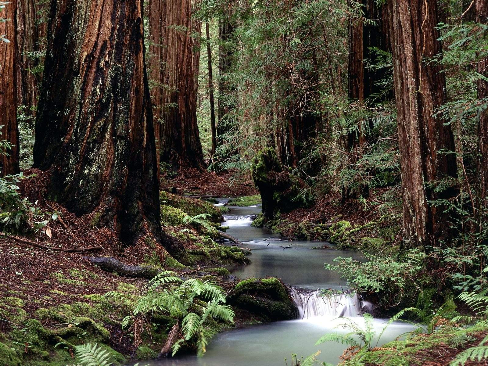 river wallpaper trees