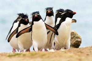 rockhopper penguin wallpaper