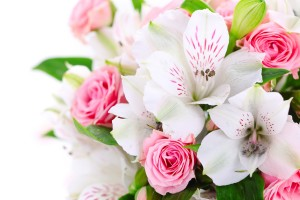 roses orchids