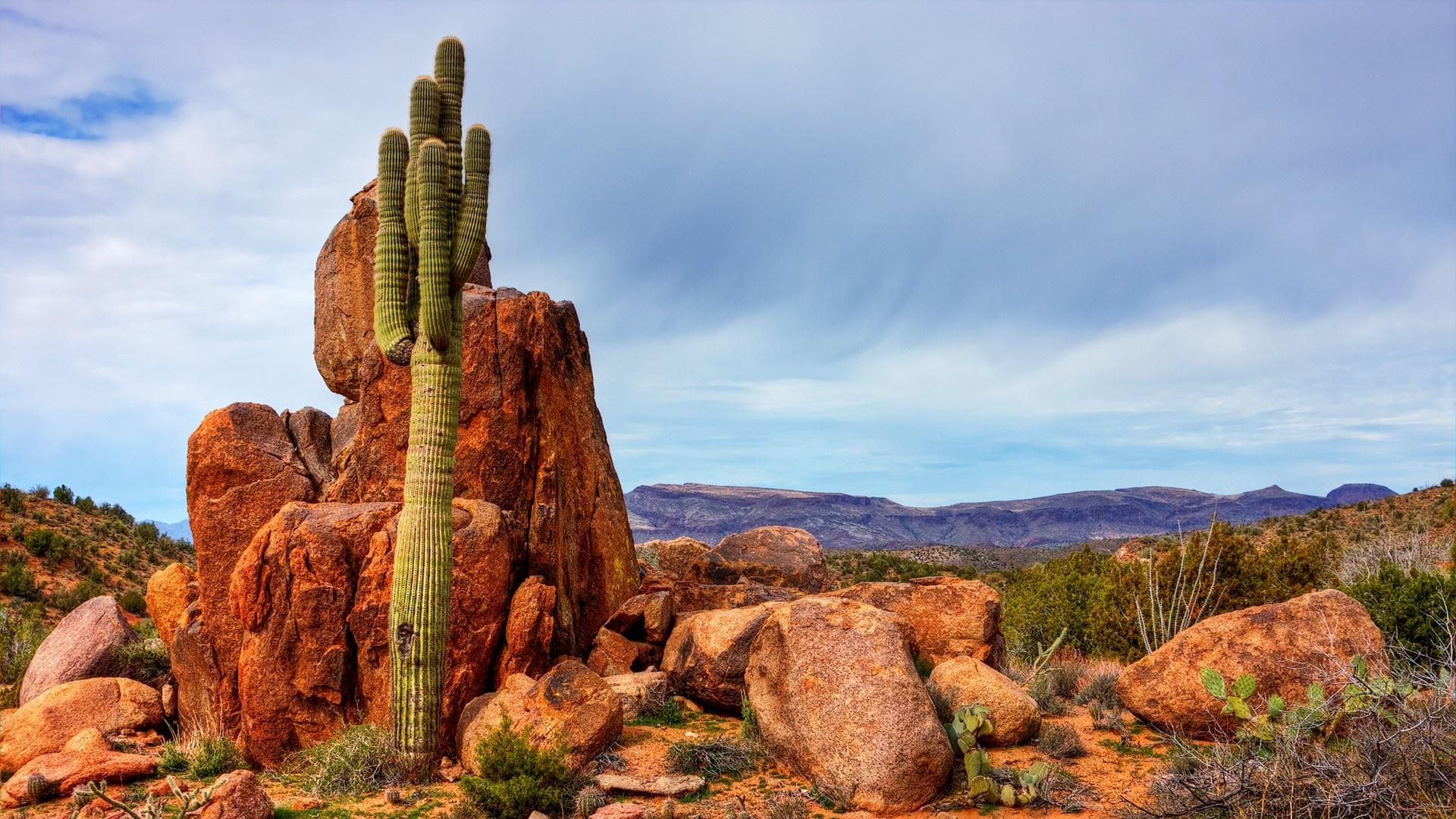 saguaro wallpapers