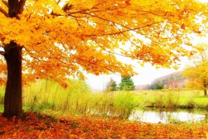 scenery autumn photography