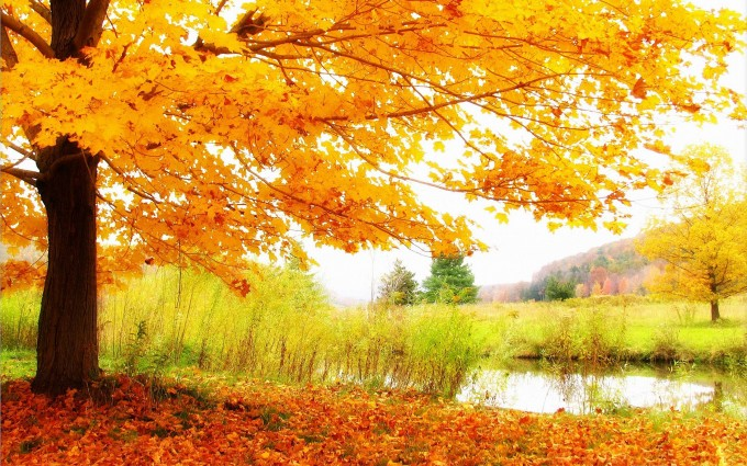 scenery autumn photography
