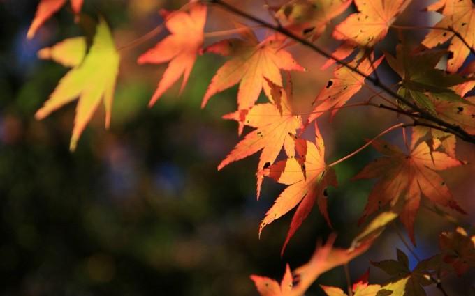 scenery autumn wallpaper
