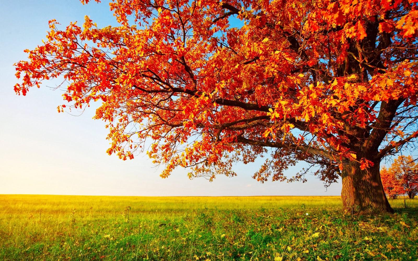 scenery autumn
