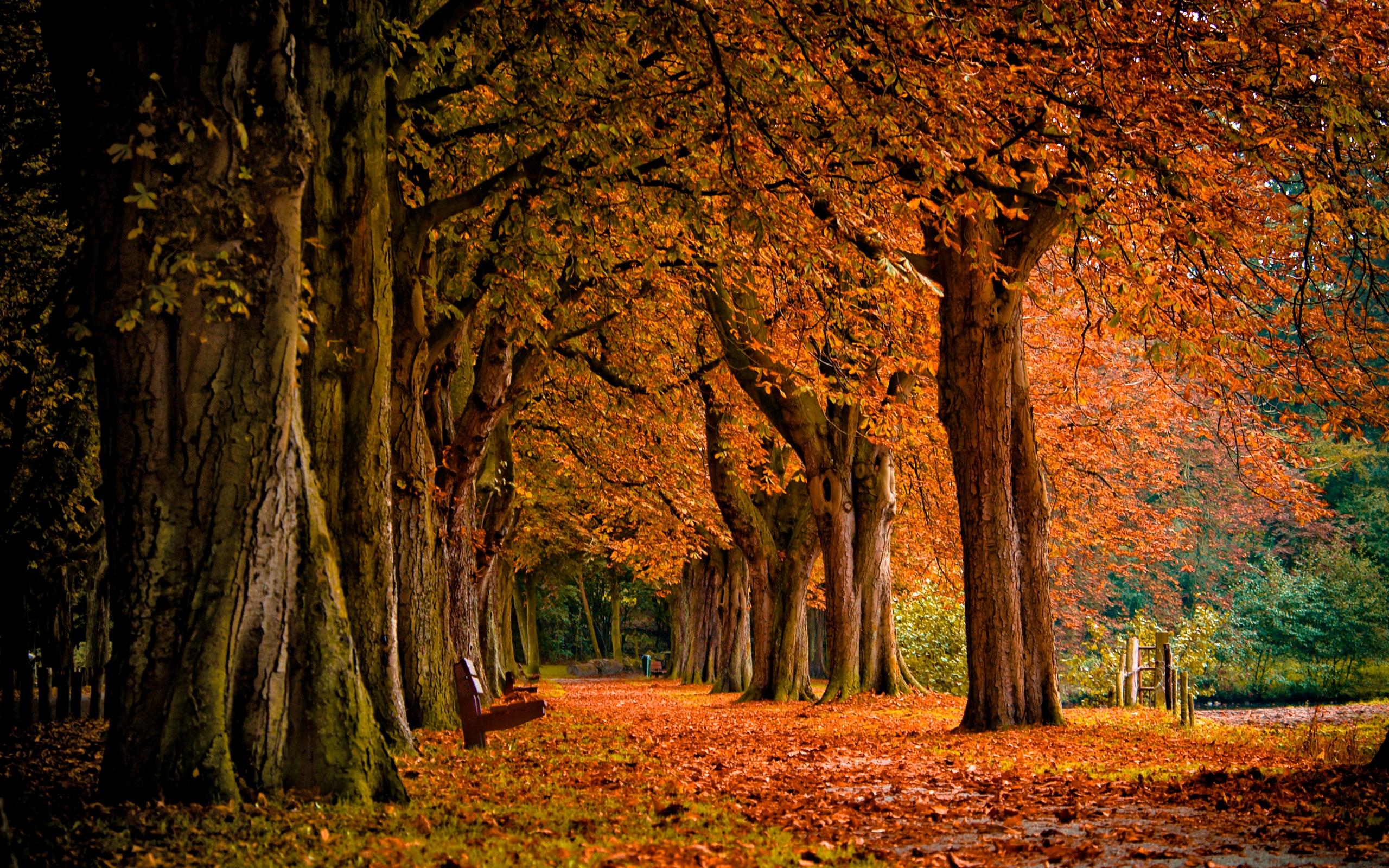 scenery fall autumn