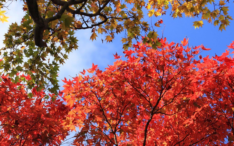 scenery fall flowers